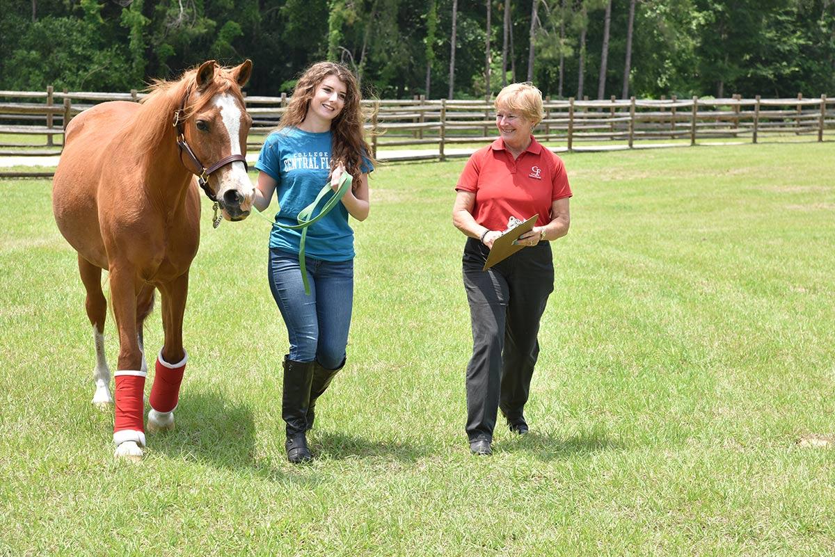 Equine Studies Solo Class
